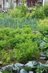CFET Garden