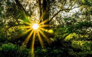 Gratitude sun rising